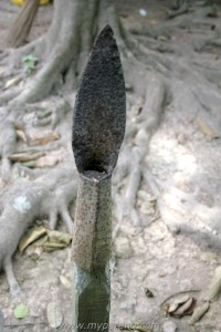 coconut peeler malaysia 2